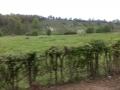 mergelgrotten gezien vanaf de Bemelerberg