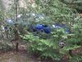 Puma in het bos